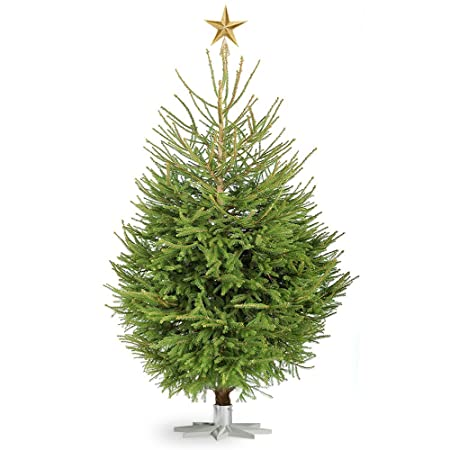 gardenersdream norway spruce real christmas trees fresh cut no mess child pet safe 4