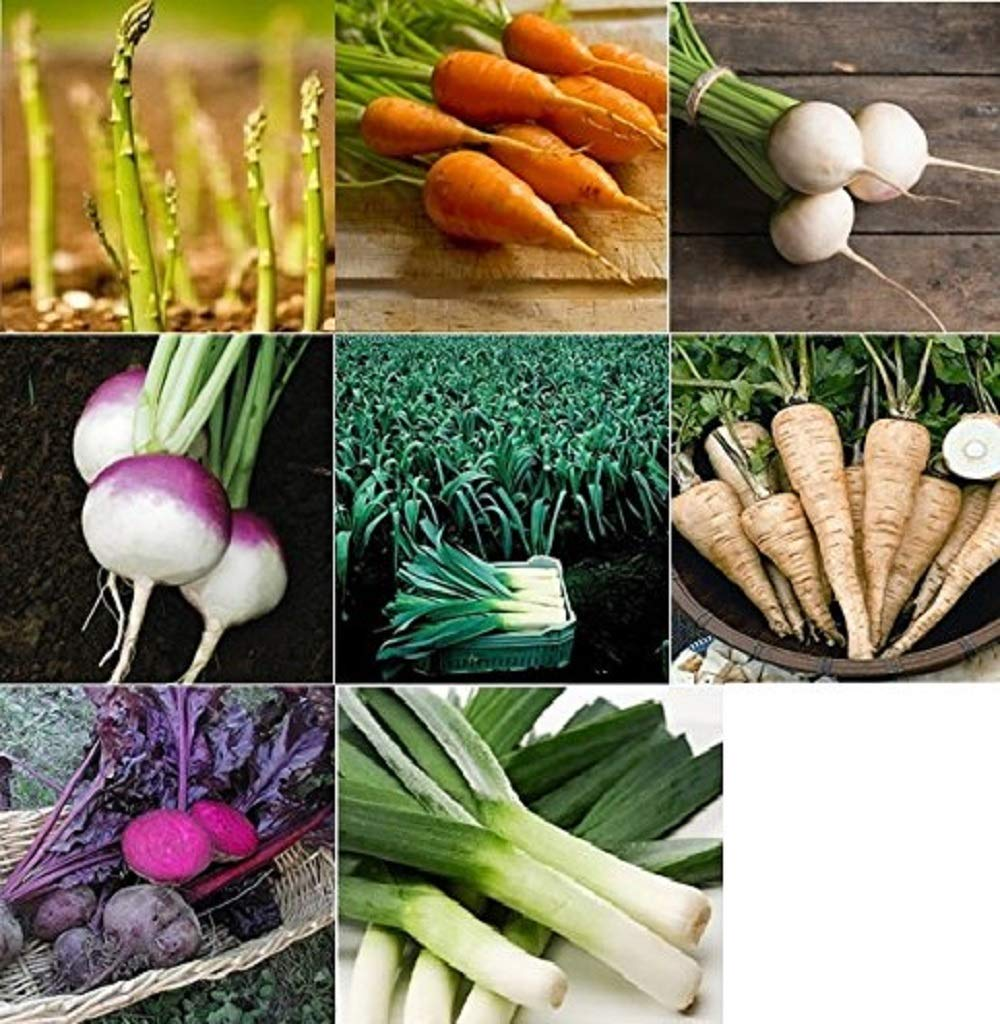 David's Garden Seeds Collection Set Root Vegetables RS0010 (Multi) 20 Varieties 7000 Seeds (Non-GMO, Open Pollinated, Heirloom, Organic)