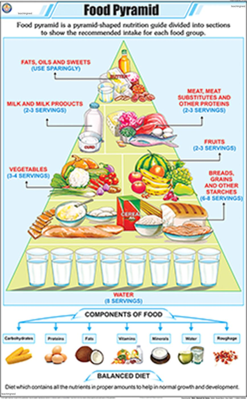 Buy Food Pyramid Chart 58x90cm Book Online At Low Prices In India Food Pyramid Chart 58x90cm Reviews Ratings Amazon In