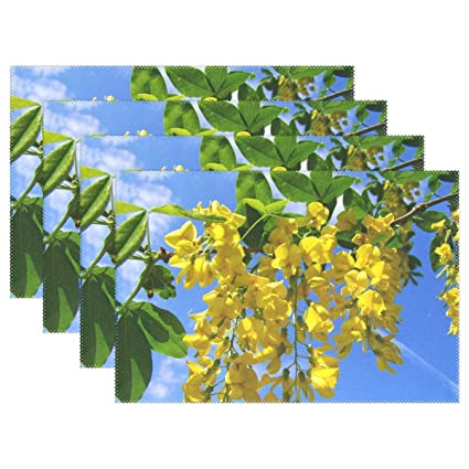 Amazoncom Aikening Yellow Flowered Acacia Gold Laburnum Blue Sky