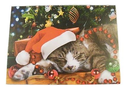 Kitten Christmas Cards.Amazon Com Classic Christmas Card 9 Pack Sleeping Kitten