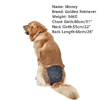 Pawz® - Pañal para Perros de Carretera con pañales reciclables para Entrenamiento de orinación e