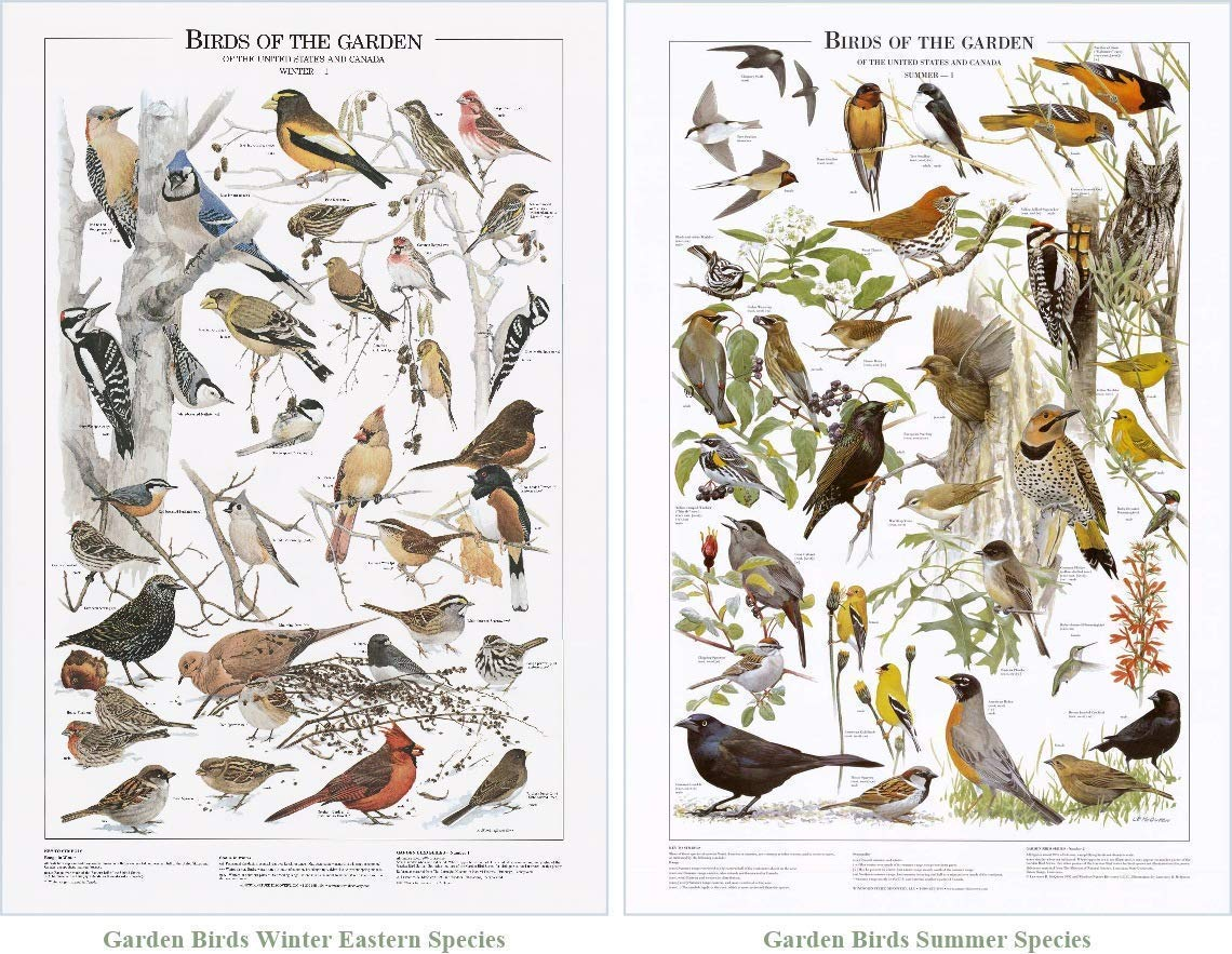Garden Bird Mini Poster Set. Summer and Eastern Winter Species Identification Charts