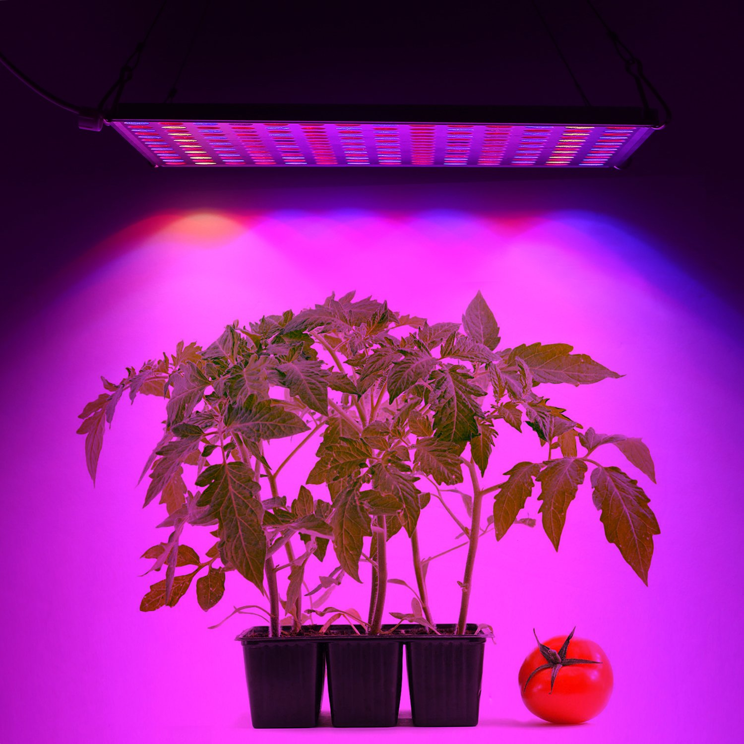 LED Grow Light for Indoor Plants,YGROW Upgraded 75W Growing Lamp Light Bulbs with Exclusive Full Spectrum for Greenhouse Hydroponic Plants from Seeding to Harvest by YGROW (Image #4)