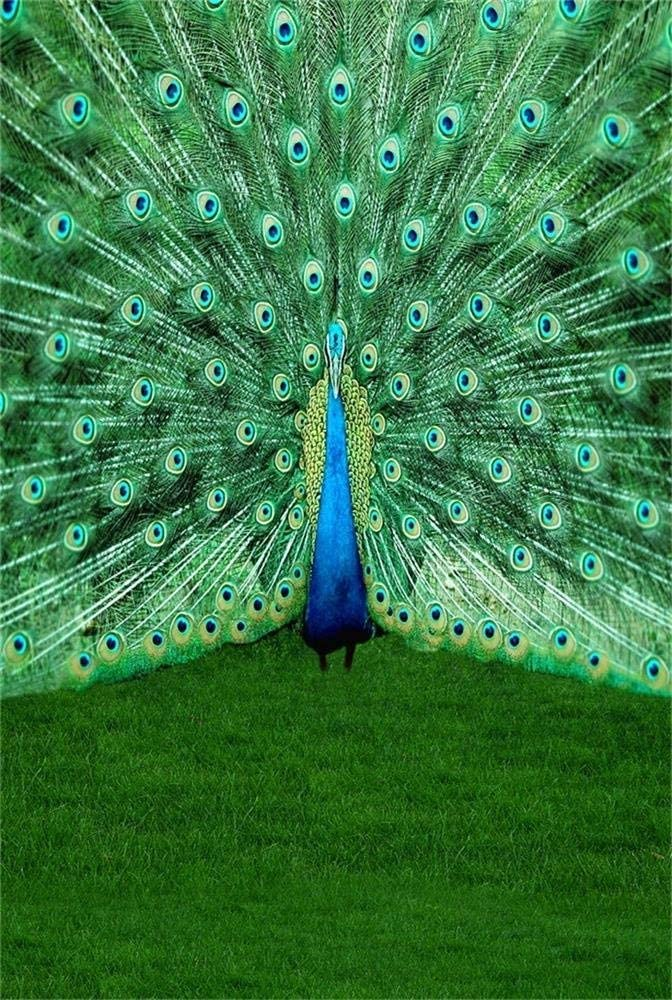 CdHBH 10x12ft Beautiful Peacock Show Off Tail Zoo Animal Feather Portrait Clothing Photo Photography Background Cloth Wallpaper Home Decor Vinyl Photo Gallery Photo Studio Photography Props