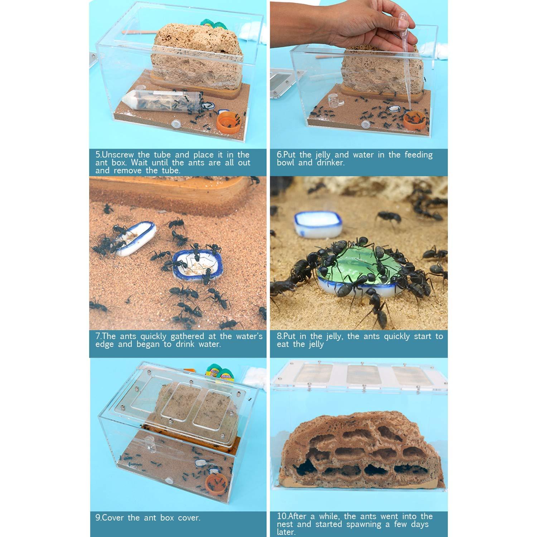 INNOLIFE Ant Castle Big Ants with Ant Nest Rockery Formicarium Large