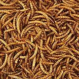 Farine würmer getrocknet haute qualité pour sac de 1kg