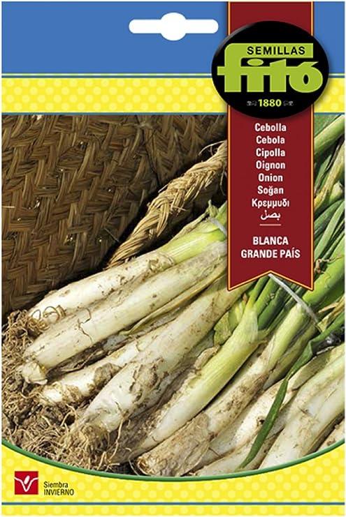 Semillas Fitó 46 - Semillas de Cebolla Blanca Grande País: Amazon ...