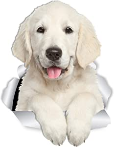 Winston & Bear Gorgeous Golden Retriever Dog Wall Decals - 2 Pack - Golden Retriever 3D Sticker Decals for Walls, Cars, Toilet and More - Retail Packaged Golden Retriever Gifts