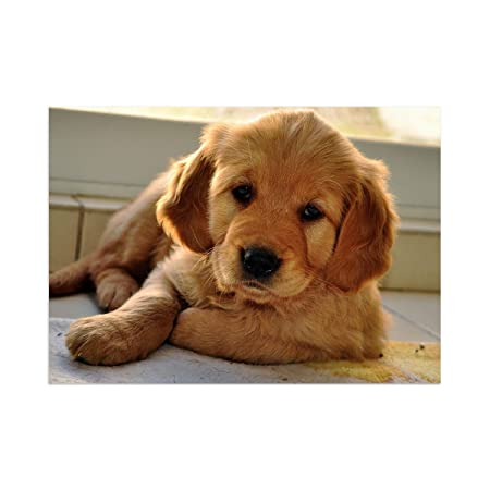 Dogs 069 Golden Retriever Puppy Laminated Wall Poster Deco