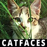CAT FACES 2018 Cute Cats Wall Calendar Monthly Planner 12x12 Inches