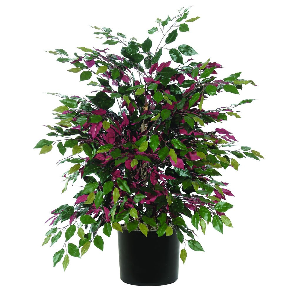 Vickerman TXX0340-06 Everyday Bush