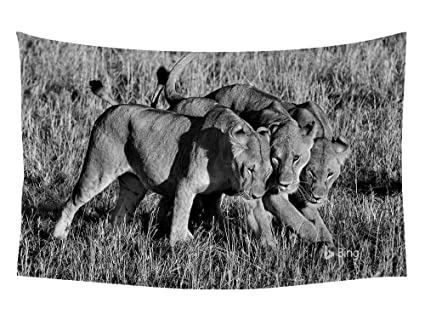 Amazon Com African Kenya Lionesses Wall Tapestry Art For Home
