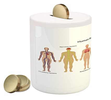 Amazon.com: Ambesonne Human Anatomy Piggy Bank by, Human Body with ...