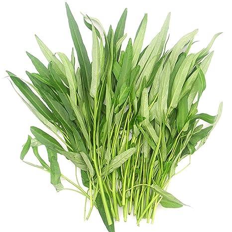 Amazon.com: Chino floración Col semillas 10 G, fácil de ...