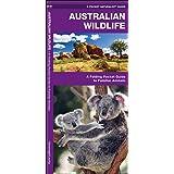 Australian Wildlife: A Folding Pocket Guide to Familiar Species