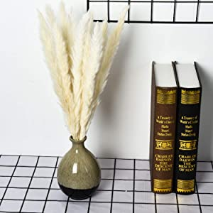 Yoken 60PCS Pampas Grass, Natural Pampas Grass Dried Reed Plumes for Wedding Decor, Flower Arrangement, Home Decor (Cream White Color)