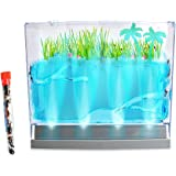 Nature Gift Store Live Lighted Ecosystem Ant Habitat Shipped with 25 Live Ants Now (1 Tube of Ants) - Lights Up