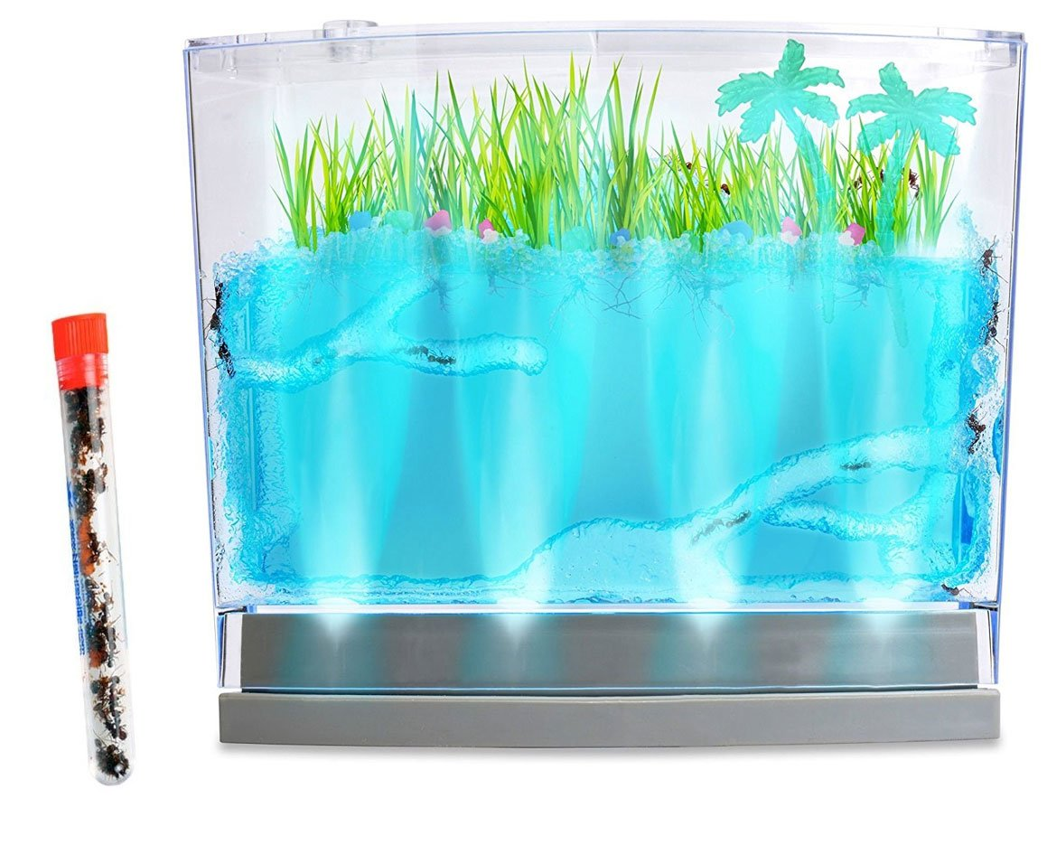 Nature Gift Store Live Lighted Ecosystem Ant Habitat Shipped with 25 Live Ants Now (1 Tube of Ants) - Lights Up by Nature Gift Store