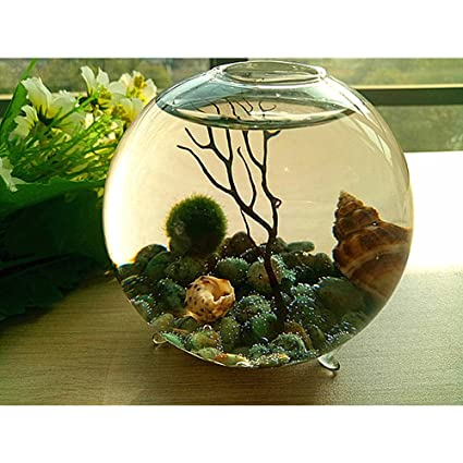 Marimo Terrarium Kit Footed Glass Vase Turquoise Raw Pebbles