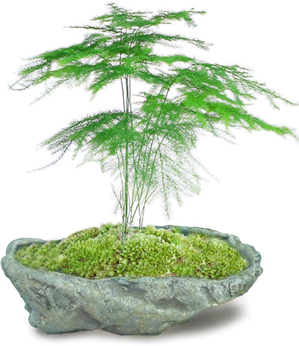 Dahlia Stone Like Handmade Concrete Succulent Planter Plant Pot Flower Pot Bonsai Pot, 9