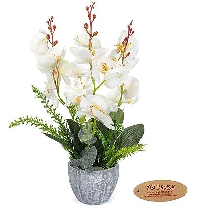 Image Unavailable  sc 1 st  Amazon.com & Amazon.com: YOBANSA Orchid Bonsai Artificial Flowers with Imitation ...