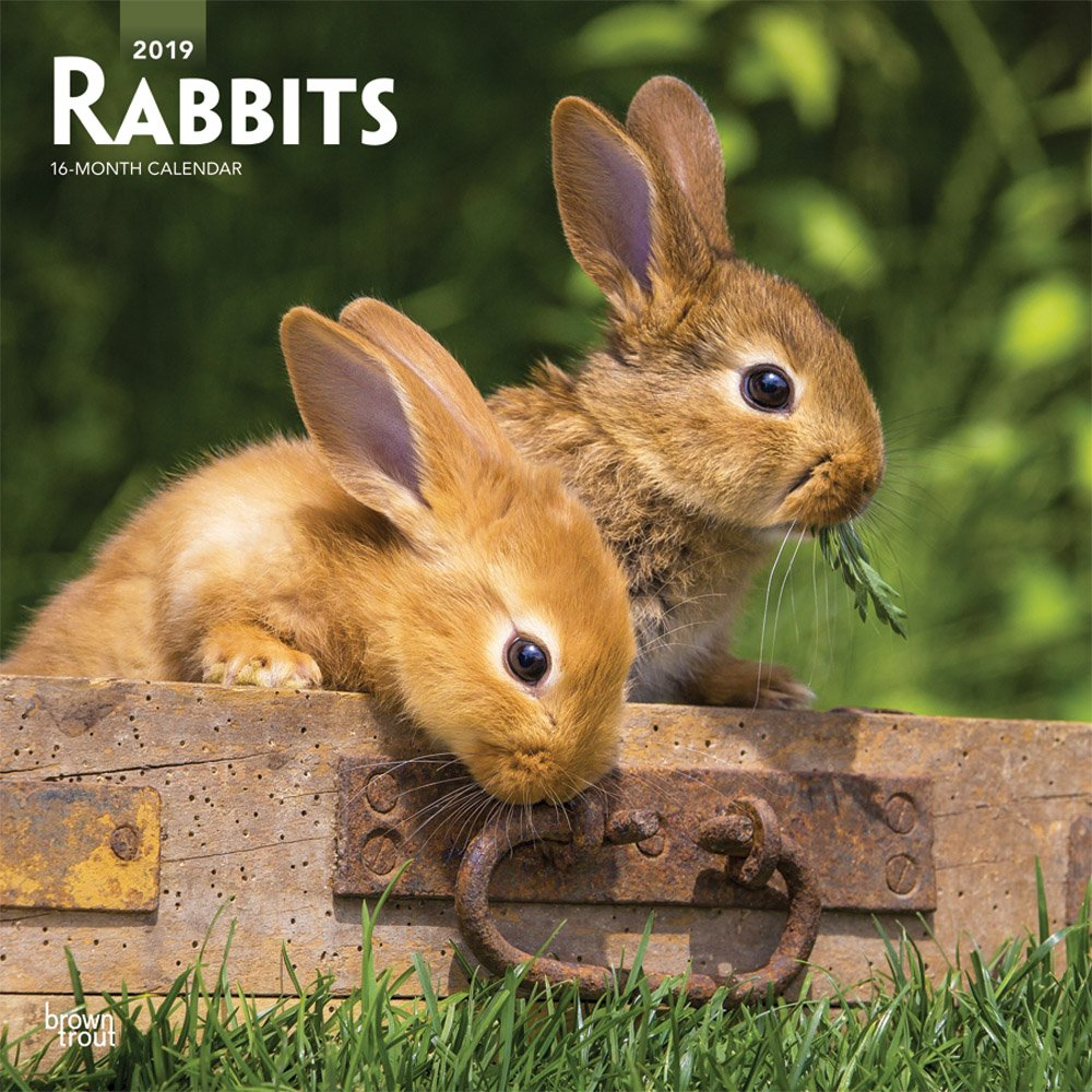 Rabbits 2019 Square Wall Calendar Calendar – Wall Calendar, 1 Sep 2018 BrownTrout 1465075577 Pets & Equine Animal Care