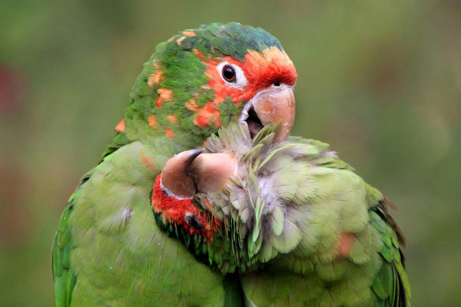 CHOIS Custom Films CF3307 Animal Parrots Birds Grass Glass Window DIY Stickers 4' W by 3' H