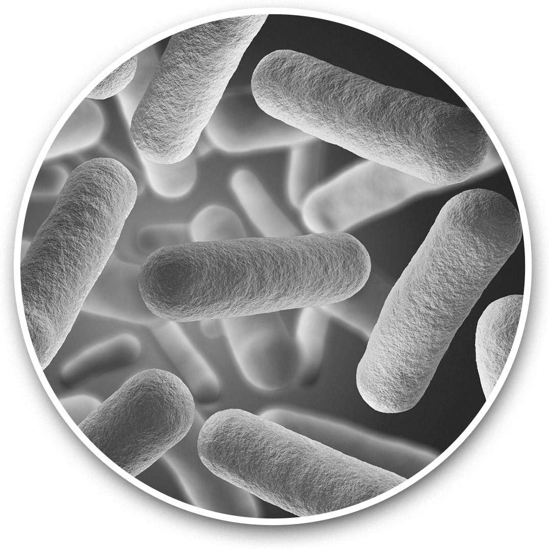 Vinyl Stickers (Set of 2) 15cm Black & White - Bacteria Virus Biology Student Laptop Luggage Tablet #42517