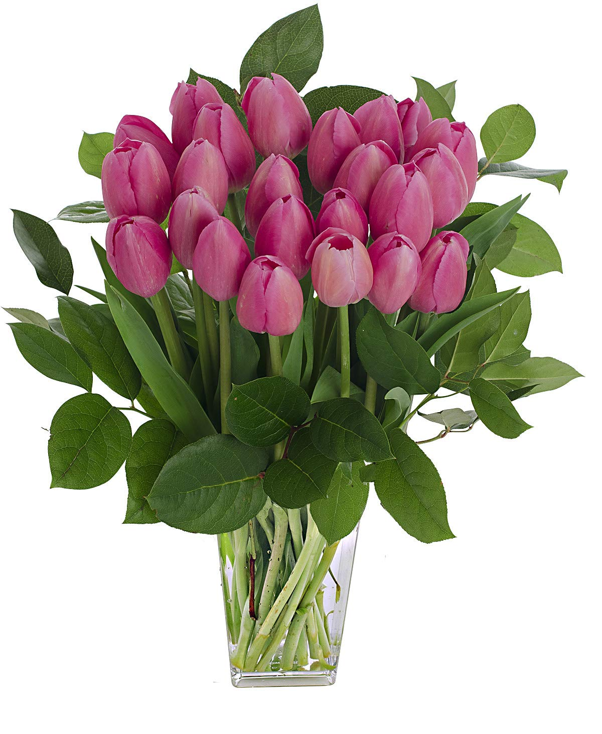Stargazer Barn - Flamenco Bouquet - 2 Dozen Bright Pink Tulips With Clear Vase - Farm Fresh