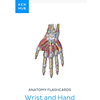 Anatomy flashcards: Wrist and Hand: Learn all bones, ligaments and muscles on the go (Kenhub Flashcards Book 75…