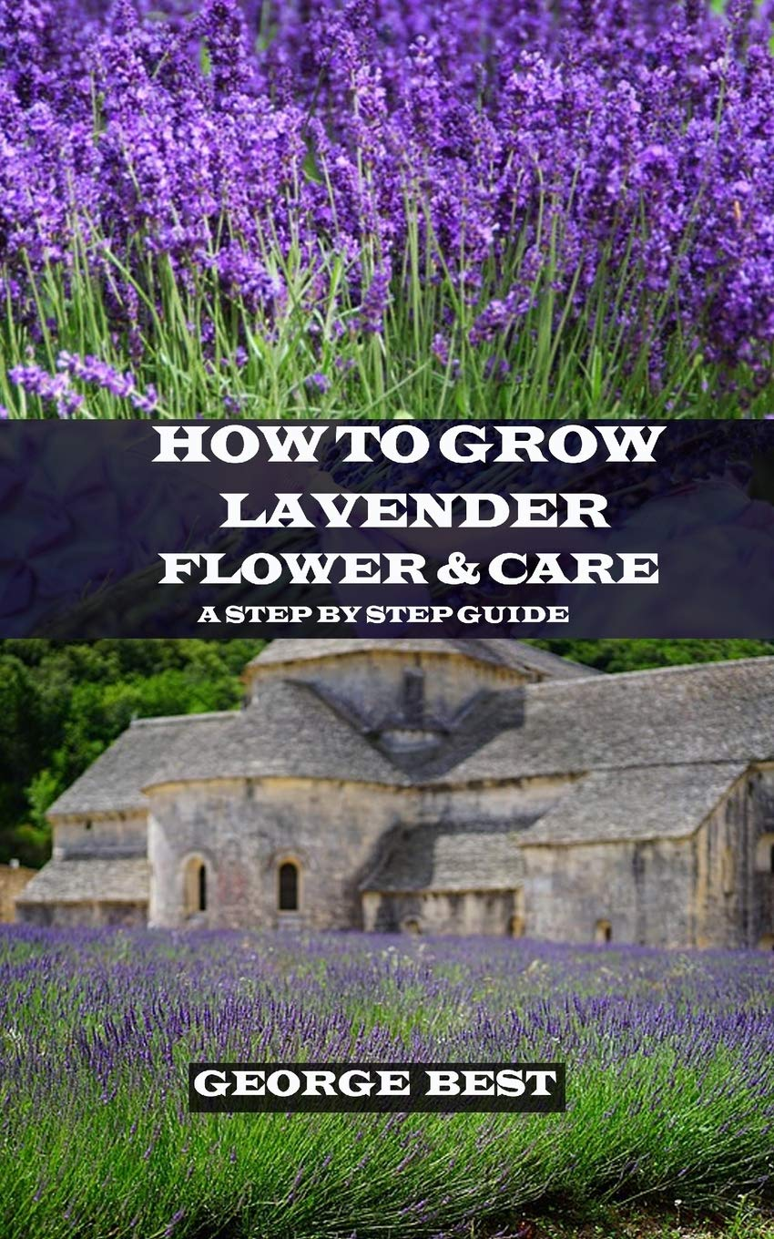 How To Grow Lavender Flower And Care A Step By Step Guide George
