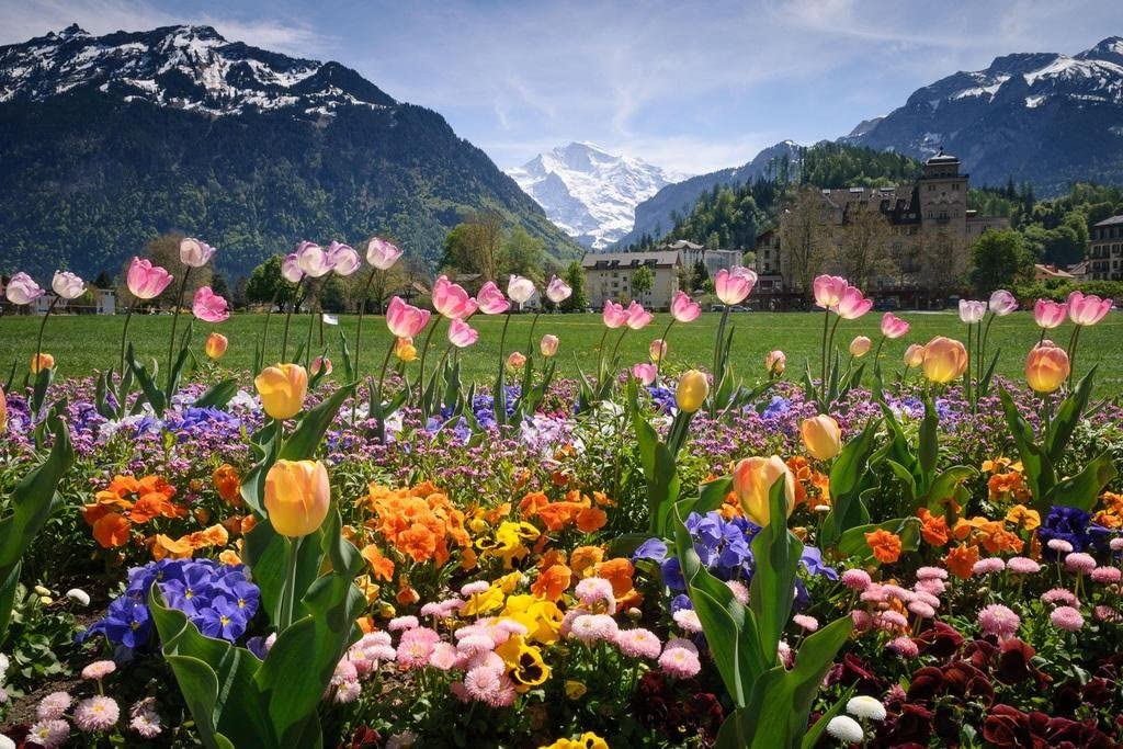 Flowers in a Garden in Interlaken Photo Photograph Cool Wall Decor Art Print Poster 36x24
