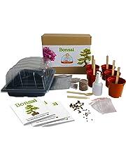 Bonsai - Mrs Henri's Plant Growing Kit. Cultive 5 Bonsáis increíbles Desde Sus Semillas traer la Naturaleza a casa o a su Oficina. El Kit de Cultivo de Plantas.