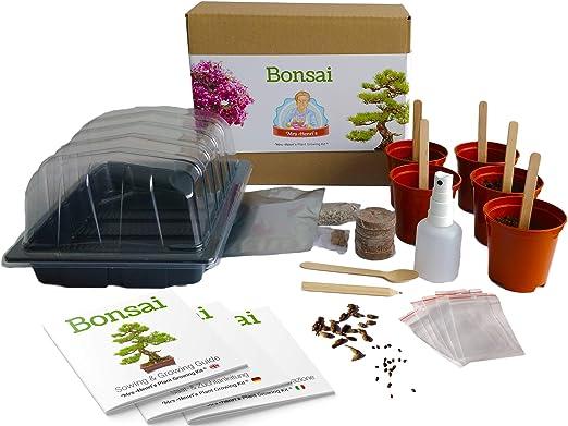 Bonsai - Mrs Henris Plant Growing Kit. Cultive 5 Bonsáis ...
