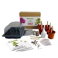 Bonsaï - Mrs Henri's Plant Growing Kit. Faites pousser 5 magnifiques Bonsaïs à partir de graines. Le cadeau idéal pour ramener la nature chez soi ou au bureau. Coffret de qualité supérieure avec tout le nécessaire pour démarrer.