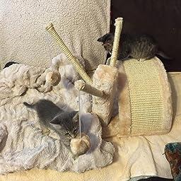 Amazon.com : Trixie Pet Products Callisto Play Tunnel ...
