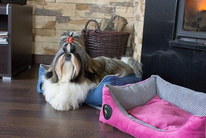 Lauren Diseño Cama para Perros CEZAR 70 cm x 60 cm marrón Acolchada/Beige | sofá | Perros - Cojín para Perros | Dormir Espacio para pequeños y Grandes ...