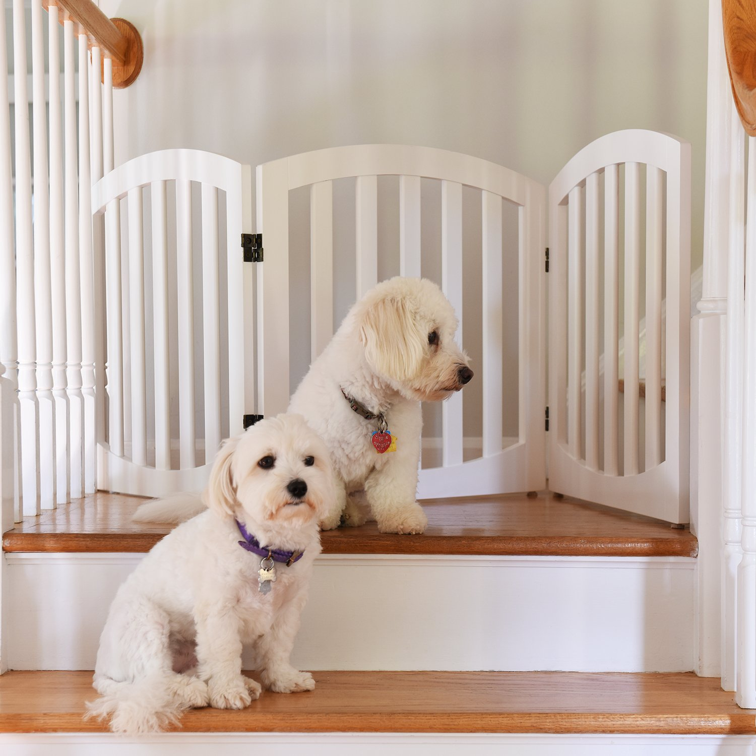 Arf Pets Free Standing Wood Dog Gate, Step Over Pet Fence, Foldable, Adjustable - White by Arf Pets