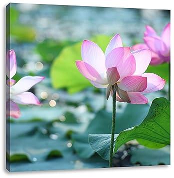 Asiatische Bilder Auf Leinwand asiatische rosa lotusblüte im teich format 60x60 auf leinwand