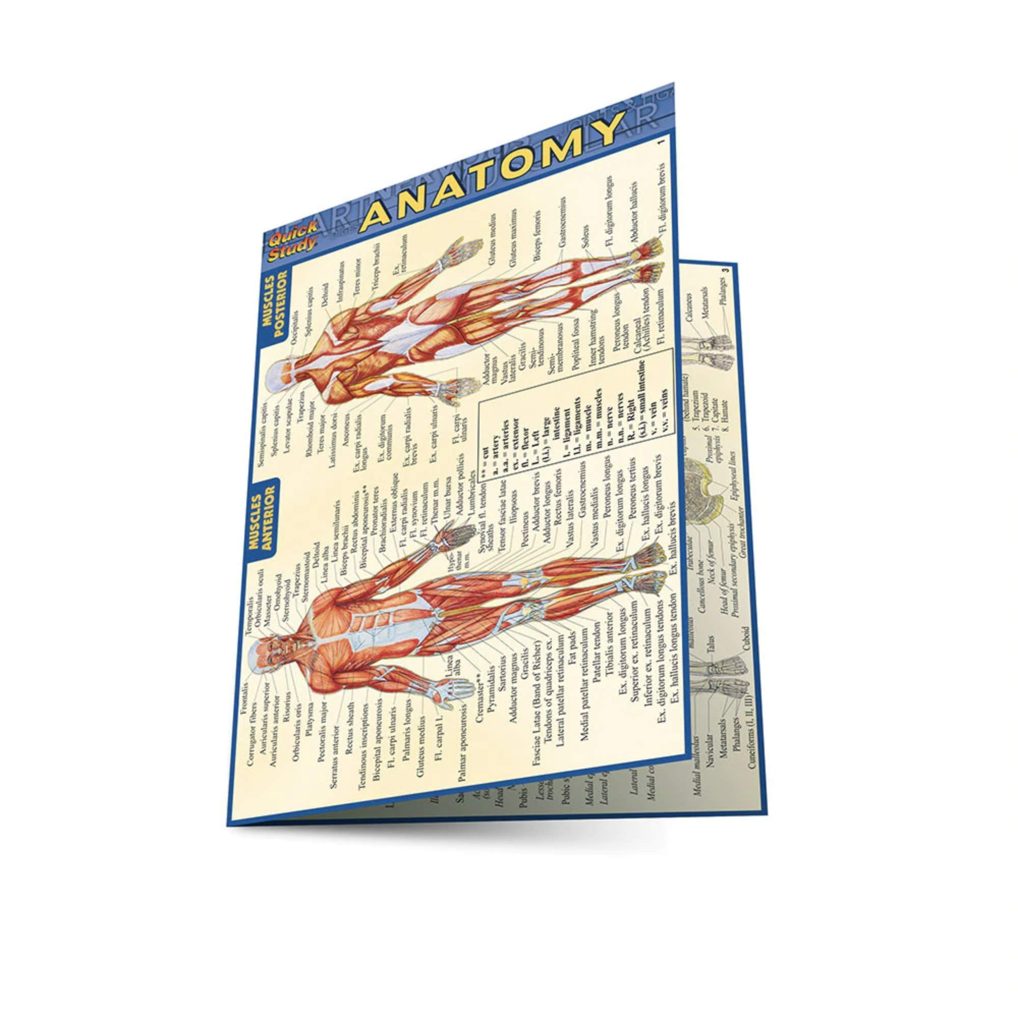 Anatomy Quick Study Anatomy Inc Barcharts 0654614207579