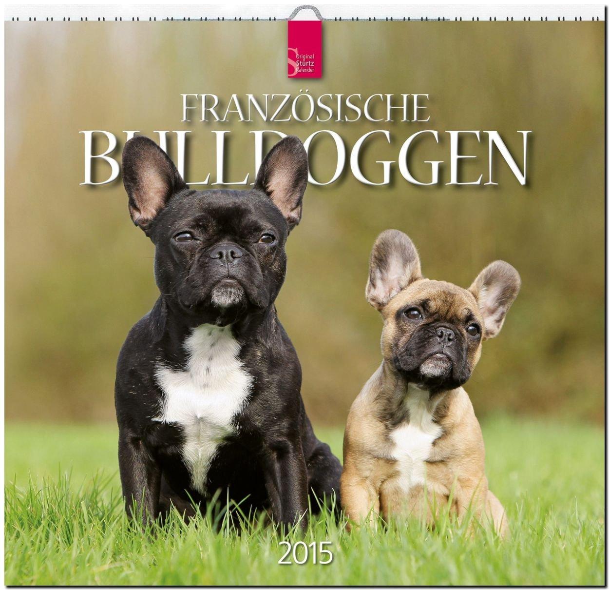 Französische Bulldoggen 2015 - Original Stürtz-Kalender - Mittelformat-Kalender 33 x 31 cm