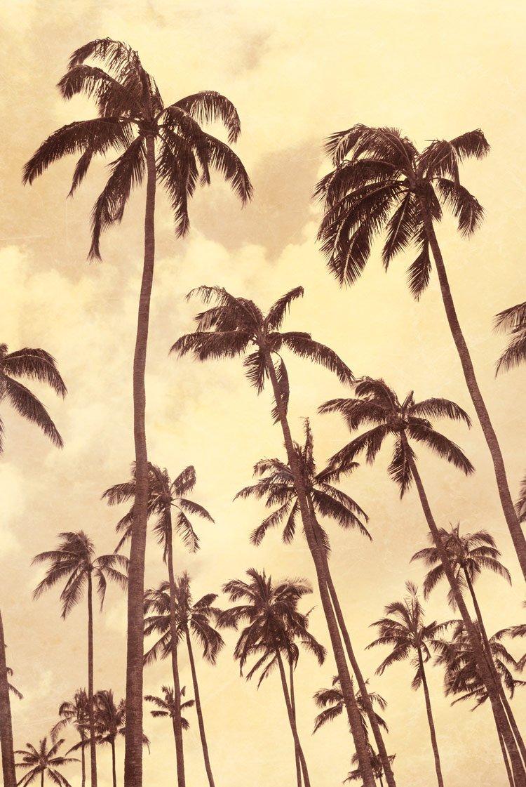 Palm Vista IV , 36x24in. (paper)
