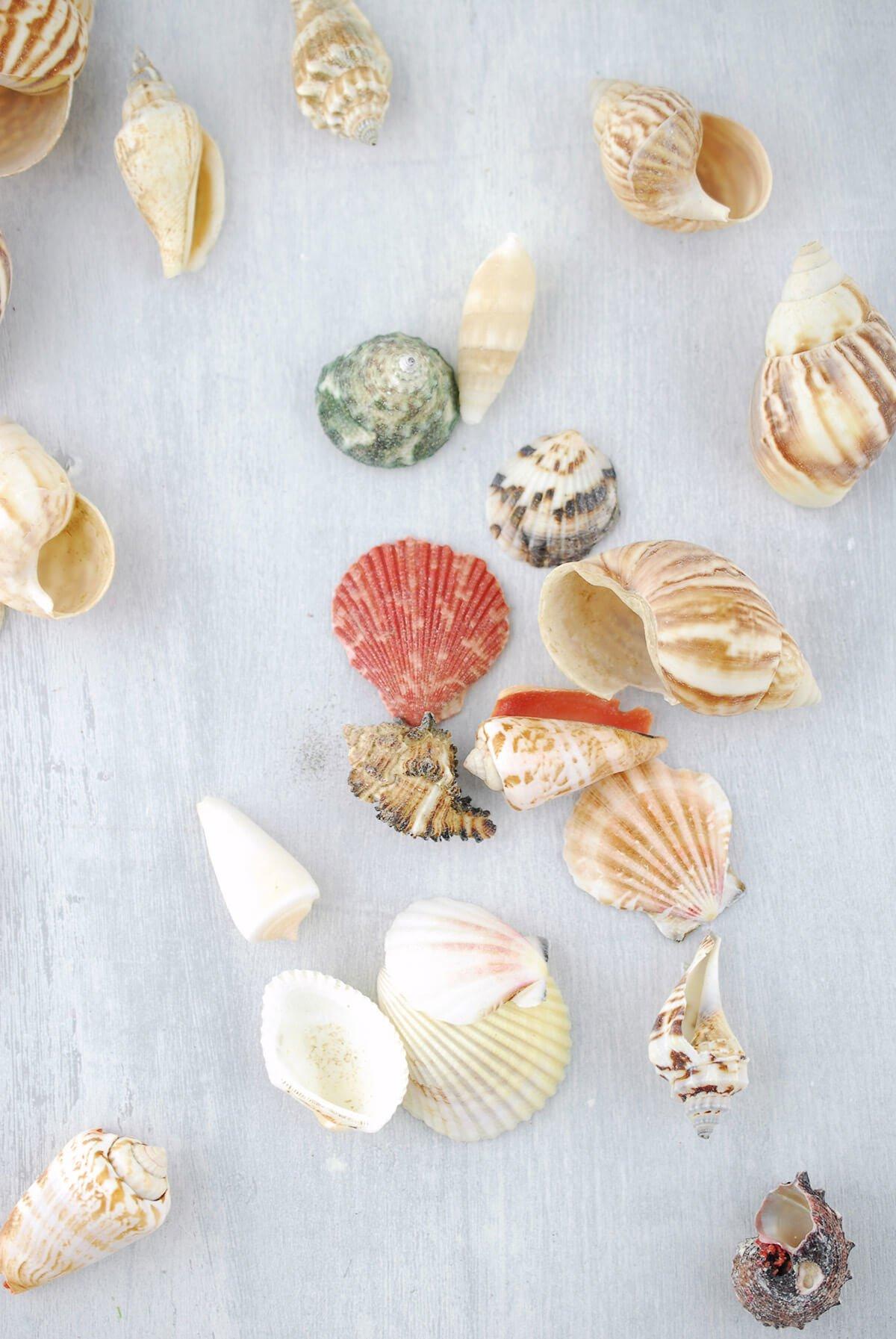Shell Vase Filler 3lbs