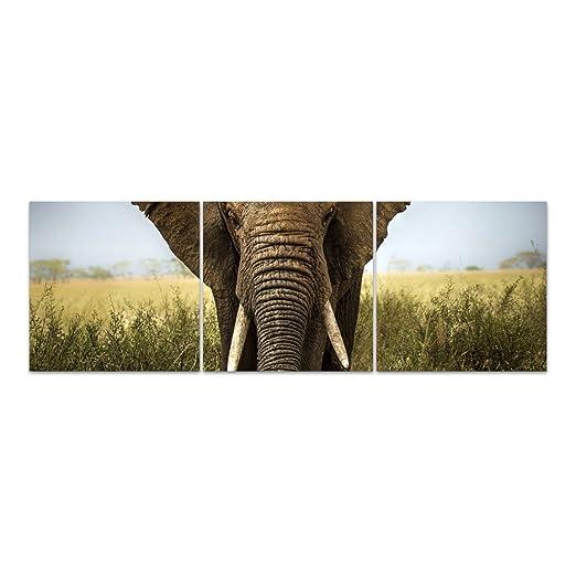 Dekoglas Glasbild Elefant Acrylglas Bild Kuche Wandbild Flur