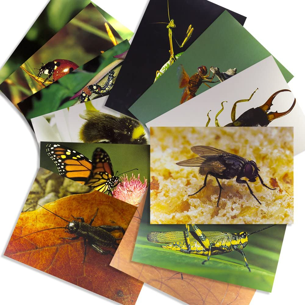 Stages Learning Materials Insect Posters for Classroom Décor, Bulletin Boards, 14 Large Picture Cards, Model:SLM158