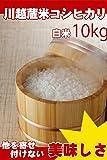 新米 埼玉県産 白米 コシヒカリ 10kg (5kg×2) 川越蔵米 (未検査米)