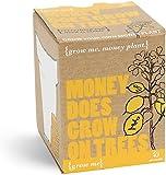 Grow Me Money Does Grow On Trees