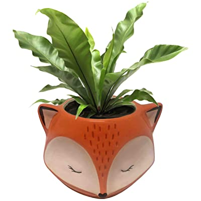 Streamline Ceramic Fox Flower Planter Pot : Garden & Outdoor