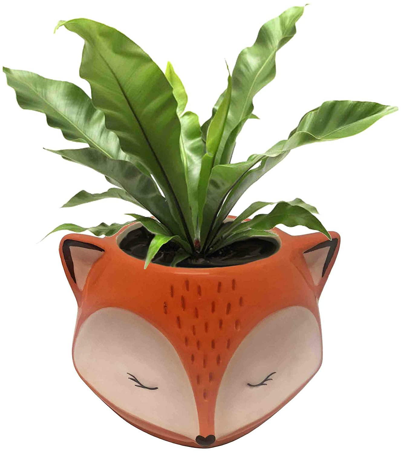 Emerald Ripple Peperomia – 4 Pot – Easy to Grow House Plant